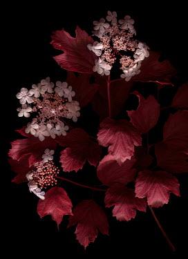 Magdalena Wasiczek PINK FLOWERS AND LEAVES IN SHADOW Flowers