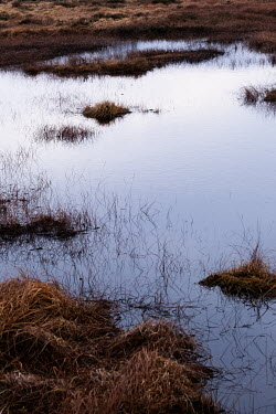 Maria Petkova WATER IN MARSHY FIELD Miscellaneous Water