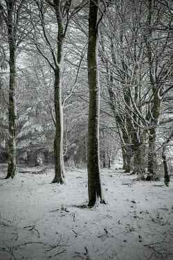 David Baker EMPTY GARDEN WITH TREES IN SNOW Trees/Forest