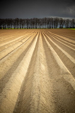 David Baker DRY FIELD WITH FURROWS AND LINE OF TREES Fields