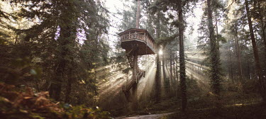Alisa Andrei TREE HOUSE IN FOREST WITH RAYS OF SUNLIGHT Miscellaneous Buildings