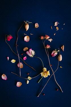 Magdalena Wasiczek Flowers
