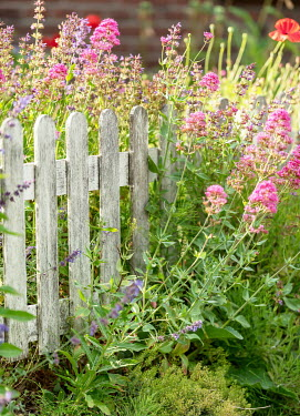 Ysbrand Cosijn Wild flowers with wooden fence in meadow