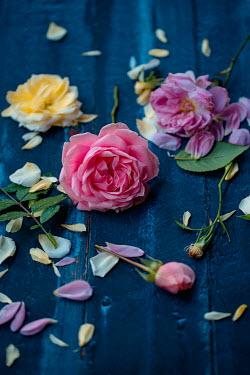 Magdalena Wasiczek Roses and petals