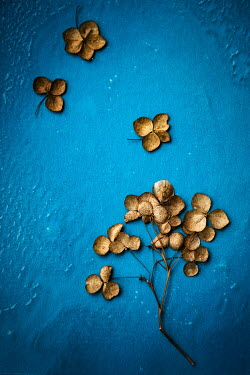 Maria Petkova Dried leaves in puddle on blue background