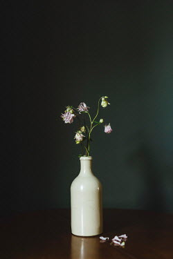 Shelley Richmond WILTED PINK FLOWERS IN WHITE BOTTLE Flowers