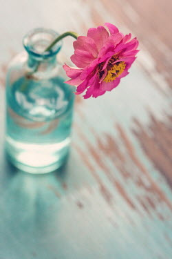 Susan Fox PINK FLOWER IN GLASS BOTTLE ON TABLE Flowers