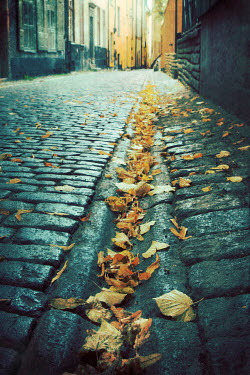 Irene Lamprakou COBBLED CITY STREET WITH AUTUMN LEAVES Streets/Alleys