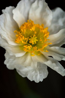 Sally Mundy CLOSE UP OF WHITE AND YELLOW FLOWER Flowers