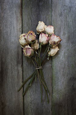 Jaime Brandel BUNCH OF WILTED ROSES ON FLOORBOARDS Flowers