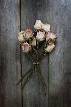 Jaime Brandel BUNCH OF WILTED ROSES ON FLOORBOARDS Flowers
