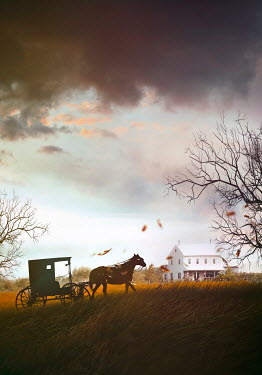 Sandra Cunningham HORSE PULLING CARRIAGE BY FARMHOUSE IN WINTER Animals
