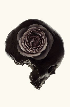 Amy Weiss SKULL IN SHADOW WITH PINK FLOWER Miscellaneous Objects