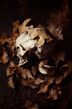 Amy Weiss BROKEN SKULL WITH AUTUMN LEAVES Miscellaneous Objects