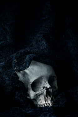 Amy Weiss SKULL IN SHADOW WITH BLACK LACE Miscellaneous Objects