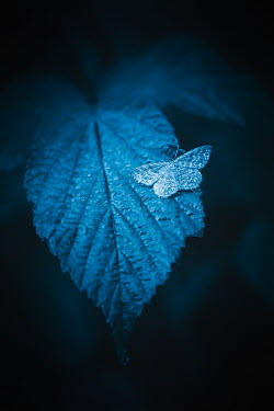 Magdalena Wasiczek SMALL BUTTERFLY ON LEAF AT NIGHT Insects