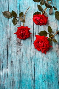 Magdalena Wasiczek THREE RED ROSES ON WOODEN TABLE Flowers