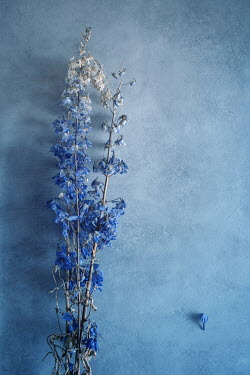Magdalena Wasiczek WITHERED BLUE FLOWERS Flowers