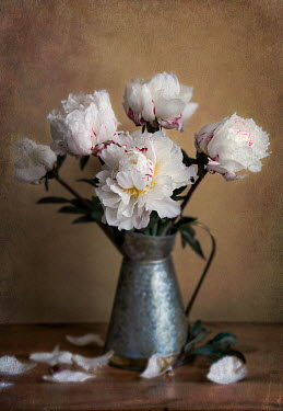 Vesna Armstrong White flowers in vase