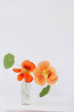 Magdalena Wasiczek ORANGE FLOWERS IN SMALL BOTTLE Flowers