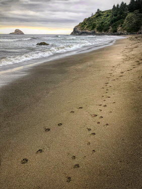 Jill Battaglia Dog footprints on the beach.