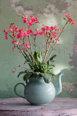 Magdalena Wasiczek Pink flowers in tea kettle