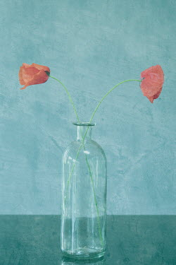 Liz Dalziel Poppy in glass bottle