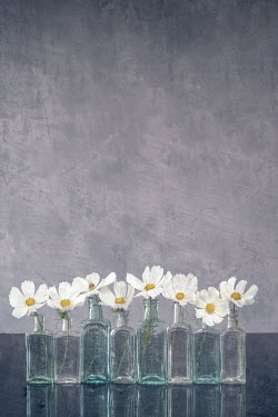 Liz Dalziel White flowers in bottles