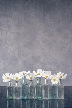 Liz Dalziel White flowers in bottles