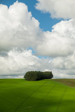 David Baker DISTANT TREES IN FIELD WITH CLOUDS Fields