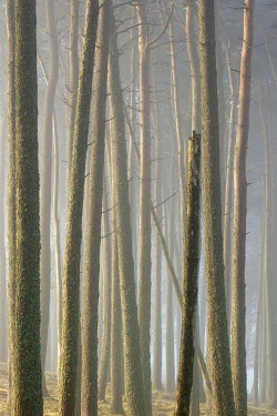 David Baker MISTY FOREST WITH SUNLIT MOSSY TREES Trees/Forest