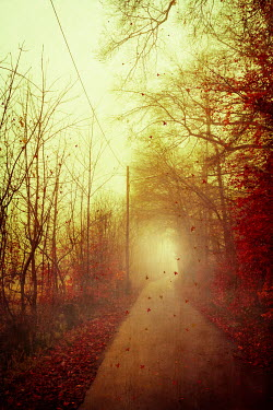 Dirk Wustenhagen COUNTRY ROAD WITH AUTUMN LEAVES Paths/Tracks