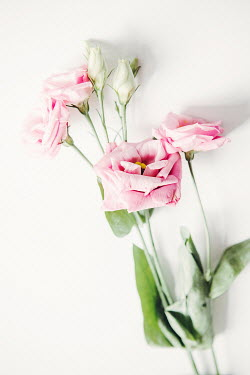 Isabelle Lafrance WHITE AND PINK FLOWERS Flowers
