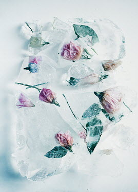Isabelle Lafrance PINK FLOWERS IN BLOCKS OF ICE Flowers
