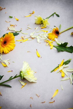 Miguel Sobreira BROKEN YELLOW FLOWERS SCATTERED ON FLOOR Flowers