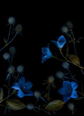 Magdalena Wasiczek BLUE FLOWERS AND THISTLES IN SHADOW Flowers