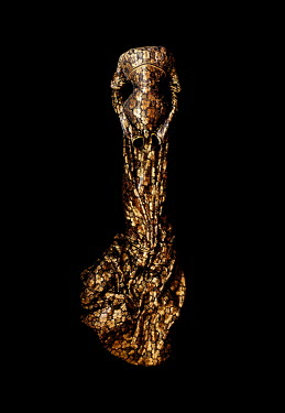 Meg Cowell GOLD EVENING GOWN IN SHADOW Miscellaneous Objects
