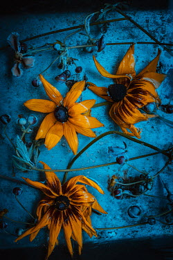 Magdalena Wasiczek WILTED ORANGE FLOWERS FLOATING IN WATER Flowers