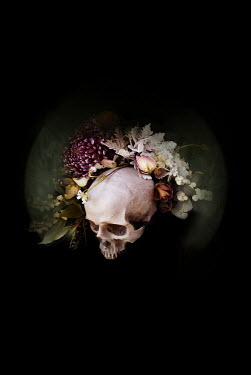 Meg Cowell SKULL DECORATED WITH FLOWERS IN SHADOW Flowers