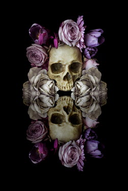Meg Cowell SKULL AND FLOWERS REFLECTED IN MIRROR Flowers