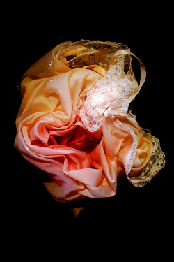 Meg Cowell SILK LACY SLIP FLOATING IN WATER Miscellaneous Objects