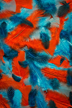Emma Goulder RED AND BLUE FEATHERS FROM ABOVE Miscellaneous Objects