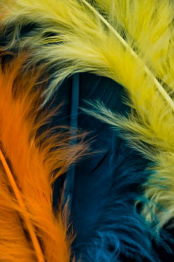 Jacinta Bernard ORANGE BLUE AND YELLOW FEATHERS Miscellaneous Objects