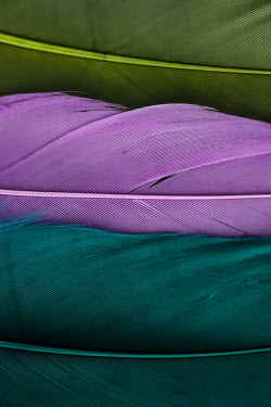 Jacinta Bernard GREEN PURPLE AND TURQUOISE FEATHERS Miscellaneous Objects