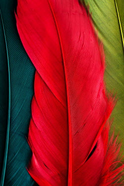 Jacinta Bernard GREEN TURQUOISE AND RED FEATHERS Miscellaneous Objects