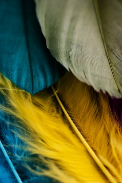 Jacinta Bernard TURQUOISE GREEN AND YELLOW FEATHERS Miscellaneous Objects