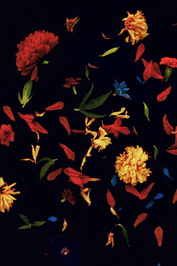 Marko Nadj FALLING YELLOW AND RED FLOWERS Flowers