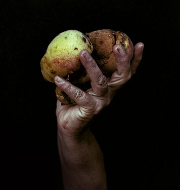 Marko Nadj MALE HAND HOLDING ROTTING POTATOES Men