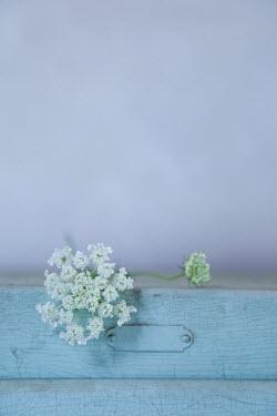 Ann Cutting WHITE FLOWER LYING ON BLUE WINDOW Flowers