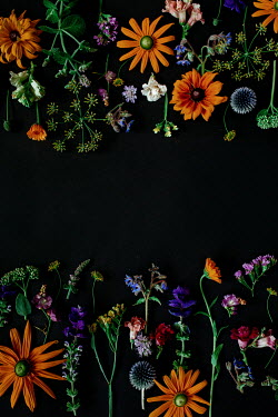 Shelley Richmond FLOWERS ON BLACK BACKGROUND Miscellaneous Objects